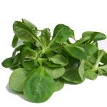 frischer Feldsalat