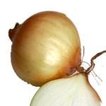Zwiebel und aufgeschnittende Zwiebel