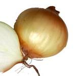 aufgeschnittende Zwiebel