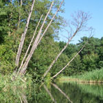 Landschaft mit Bäumen und See