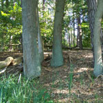 Garten mit Bäumen