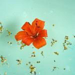 Wasser mit Blüten
